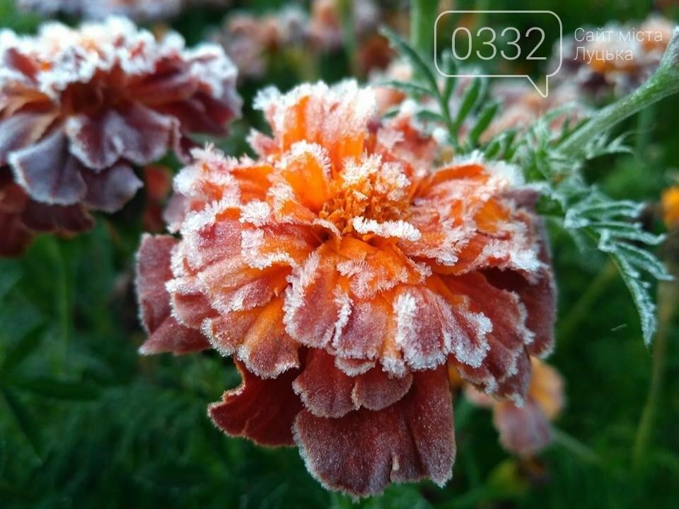 І краса і біль: неймовірні рослини на світлинах луцького фотографа, фото-2