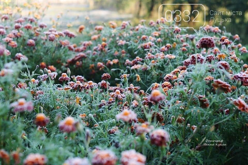 І краса і біль: неймовірні рослини на світлинах луцького фотографа, фото-1