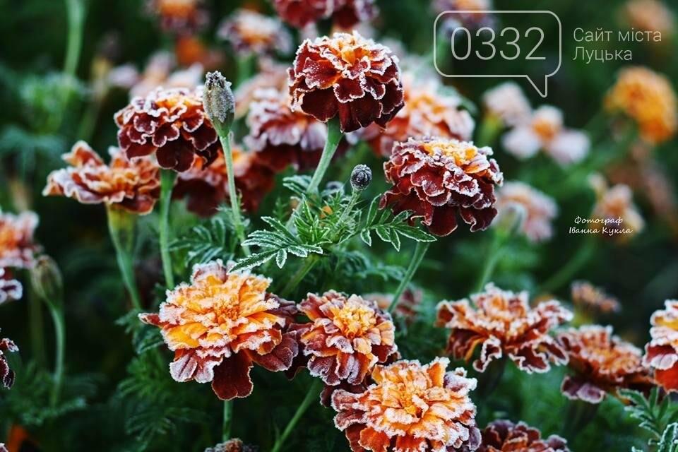 І краса і біль: неймовірні рослини на світлинах луцького фотографа, фото-4