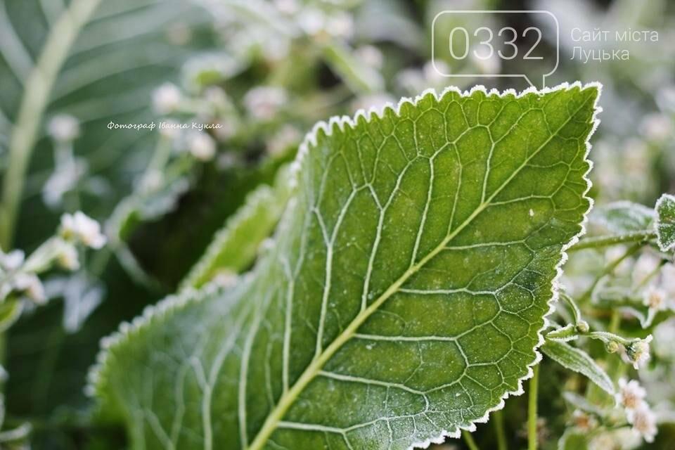 І краса і біль: неймовірні рослини на світлинах луцького фотографа, фото-6