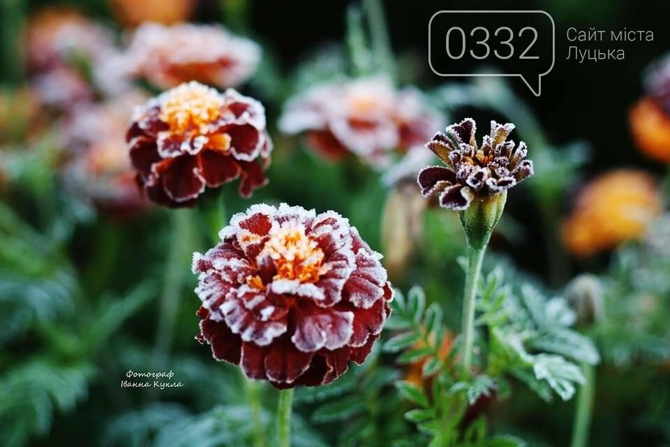 І краса і біль: неймовірні рослини на світлинах луцького фотографа, фото-5