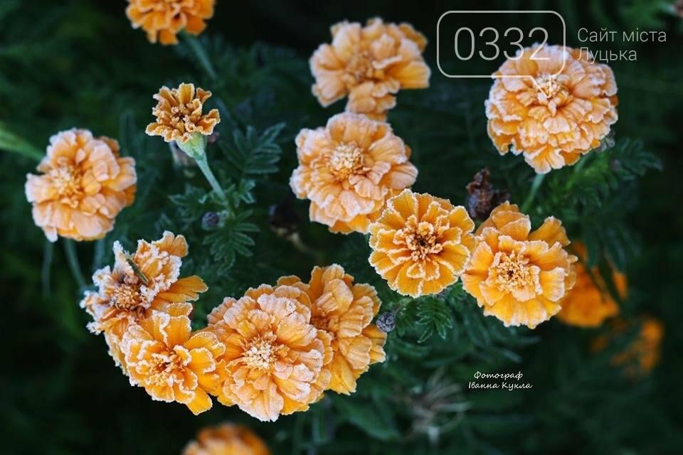 І краса і біль: неймовірні рослини на світлинах луцького фотографа, фото-7