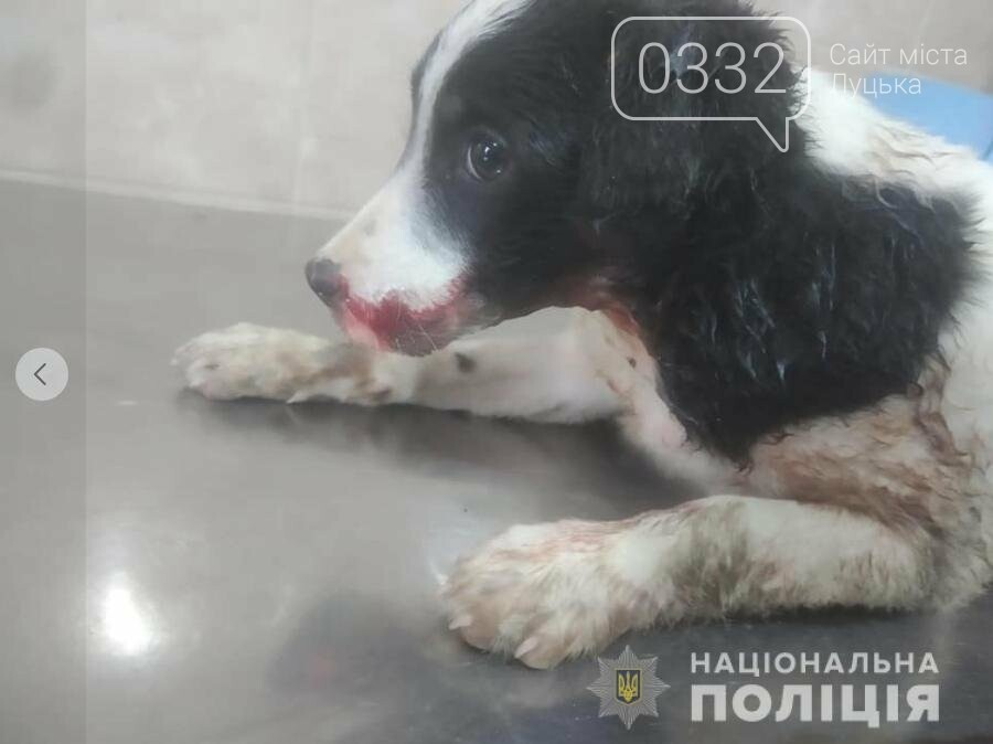В Луцьку поліцейські охорони врятували цуценя, якого на трасі збила машина  (фото), фото-3