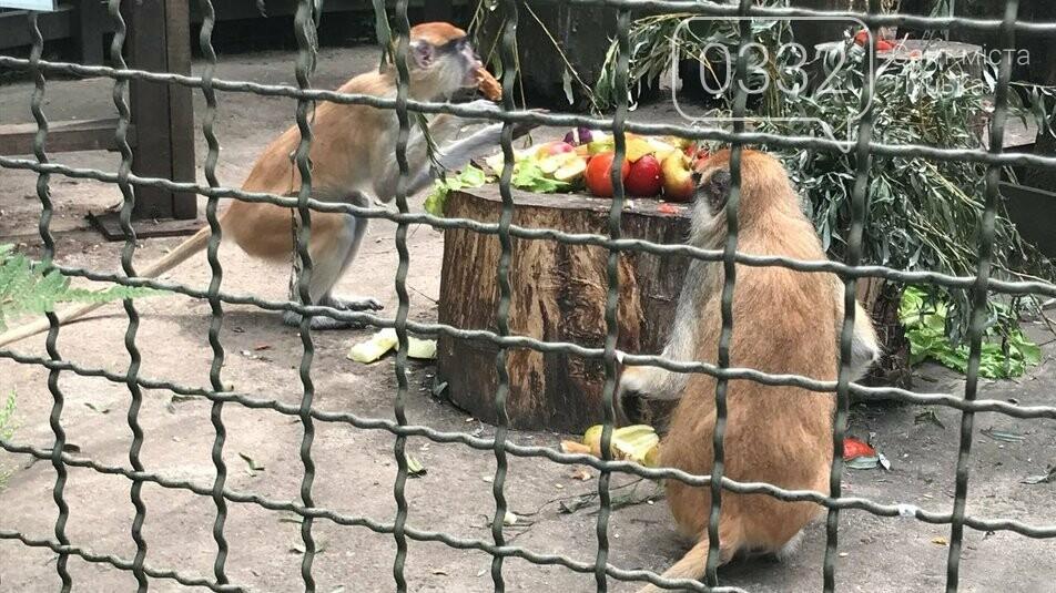Особливий раціон і щасливі мавпи: як спека впливають на мешканців Луцького зоопарку, фото-2