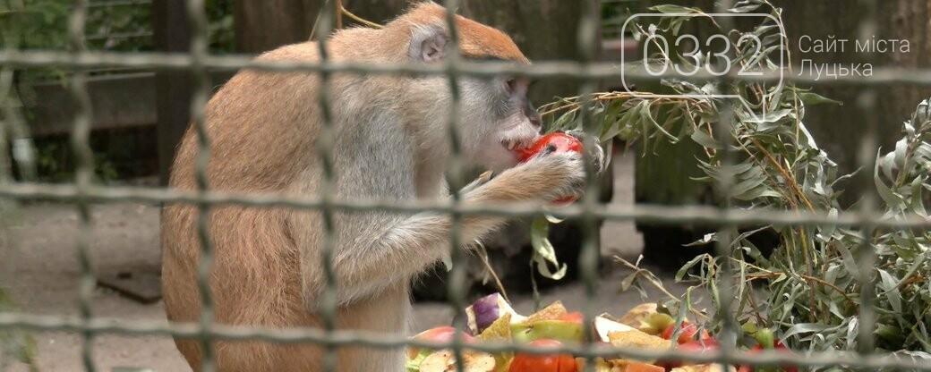 Особливий раціон і щасливі мавпи: як спека впливають на мешканців Луцького зоопарку, фото-3