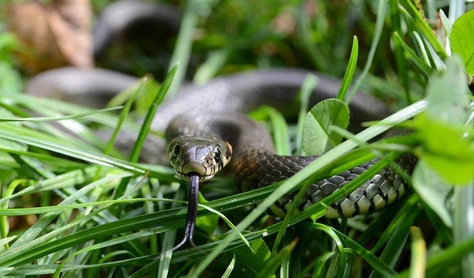 Волинський фотограф показав тваринний світ у збільшеному вигляді (ФОТО), фото-1