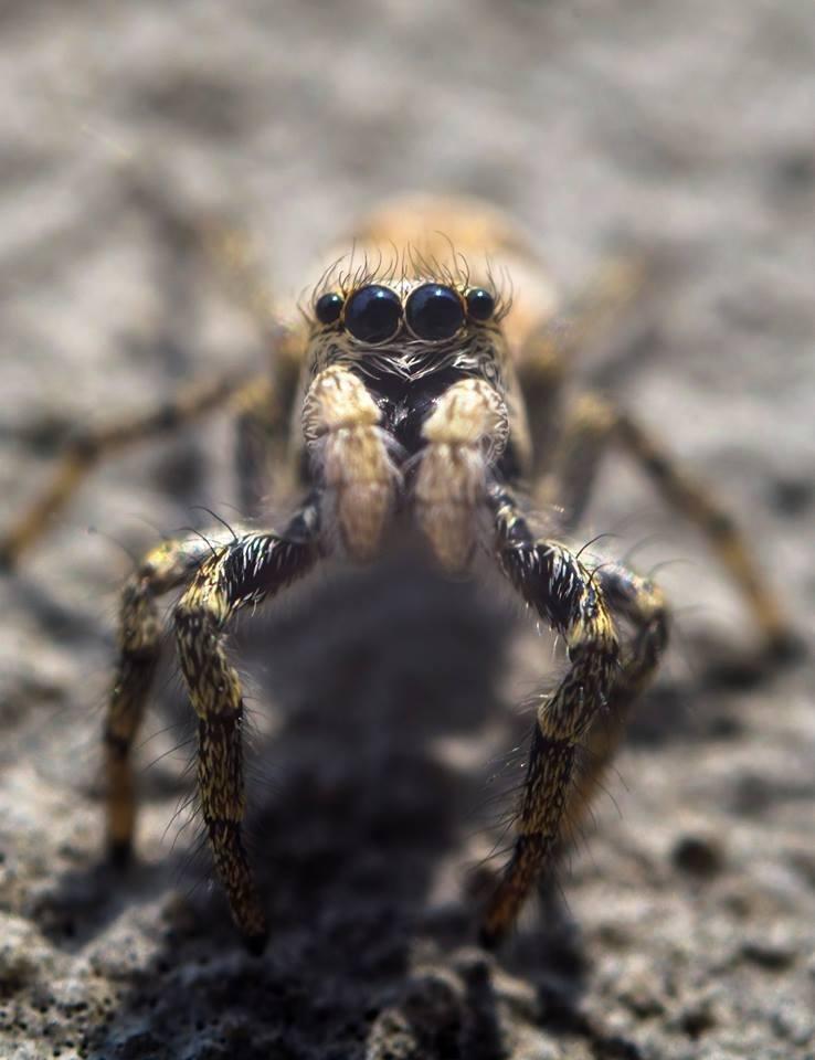 Волинський фотограф показав тваринний світ у збільшеному вигляді (ФОТО), фото-6
