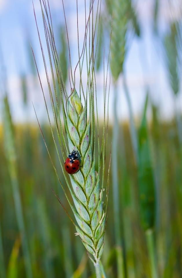 Волинський фотограф показав тваринний світ у збільшеному вигляді (ФОТО), фото-7