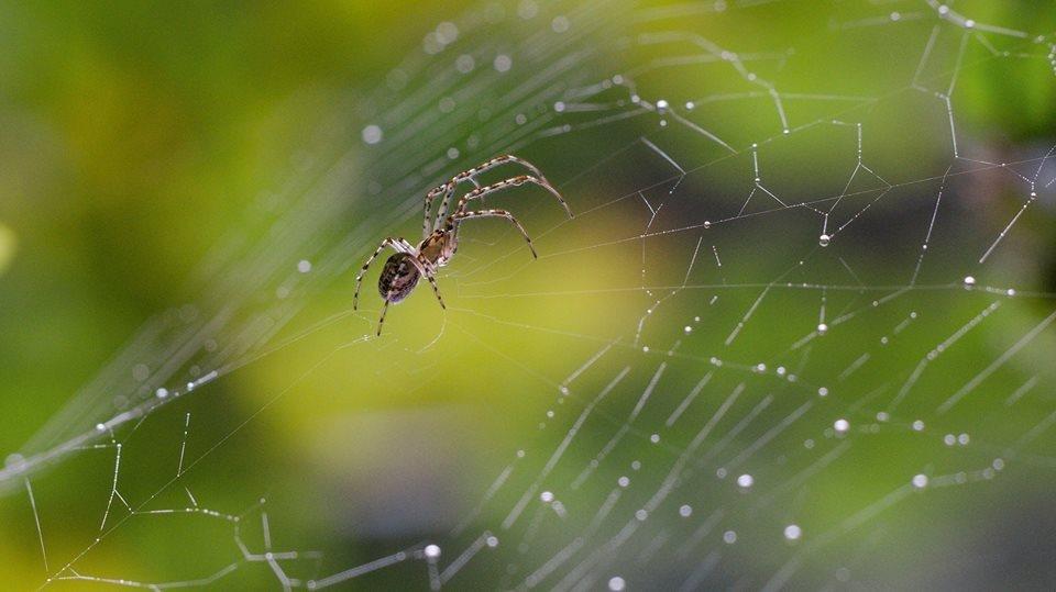 Волинський фотограф показав тваринний світ у збільшеному вигляді (ФОТО), фото-11