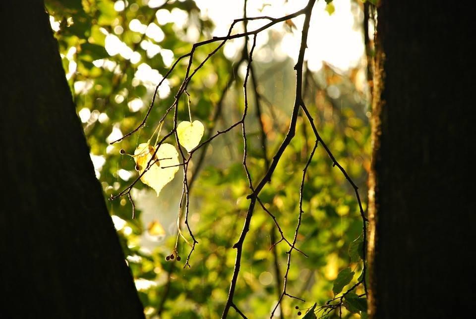 Осіннє мереживо оповило ранковий Луцьк (ФОТО), фото-1