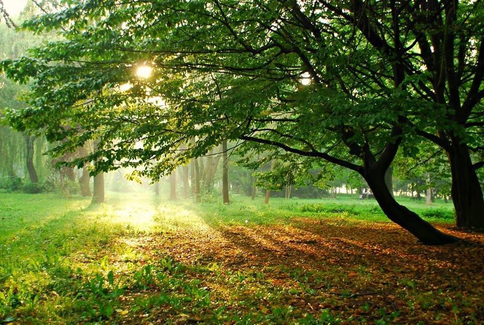 Осіннє мереживо оповило ранковий Луцьк (ФОТО), фото-7