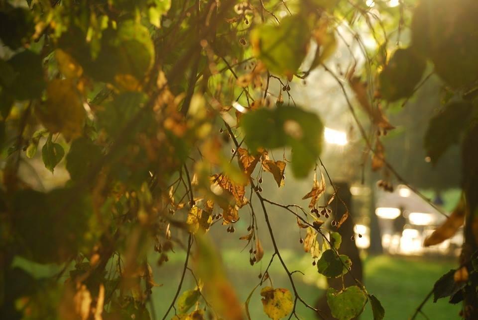 Осіннє мереживо оповило ранковий Луцьк (ФОТО), фото-5