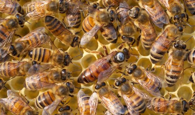 Отримати дотацію у Луцьку можуть власники бджолосімей, фото-1