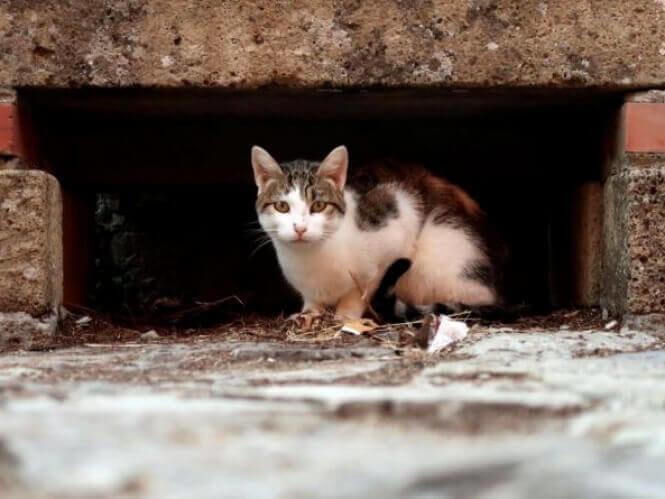 Рішення про захист котів ухвалила Луцька міськрада, фото-1