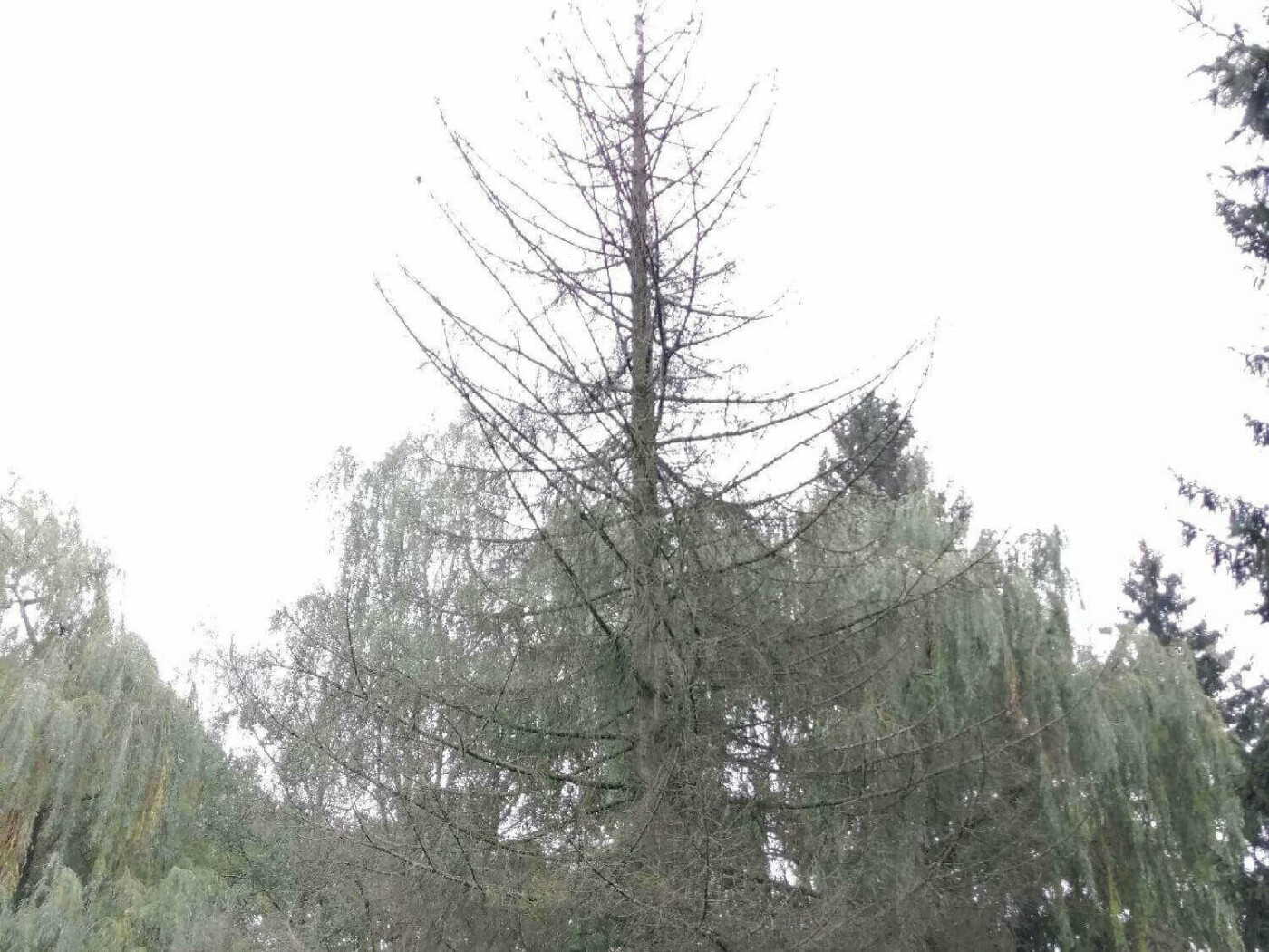 У Луцьку повалені дерева ніхто не прибирає тривалий час, фото-1