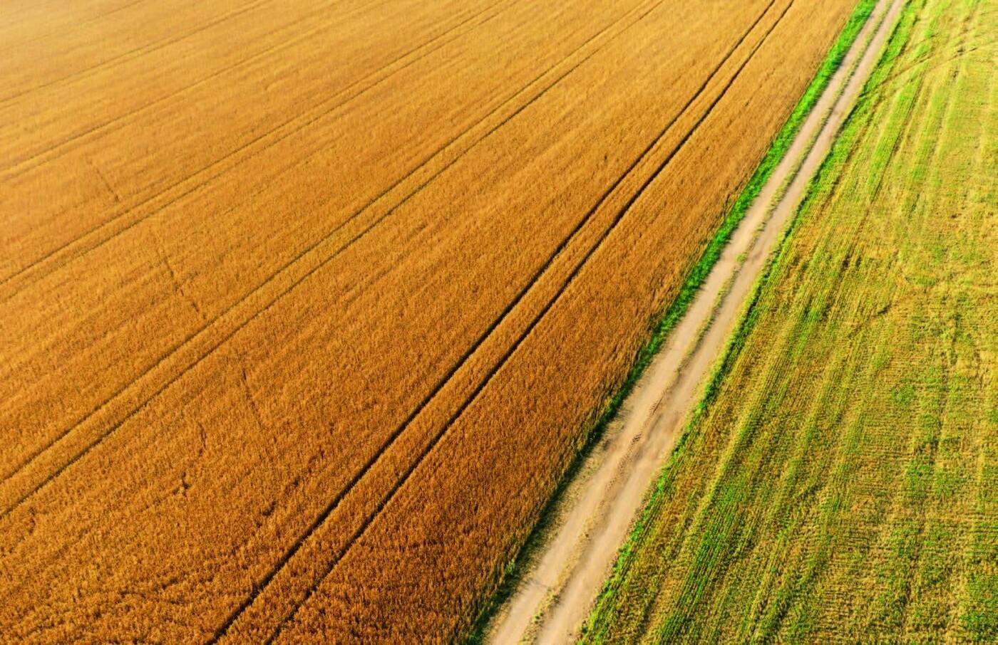 Мішки зерна замість грошей: чому мораторій на продаж землі буксує розвиток сіл Волині, фото-1